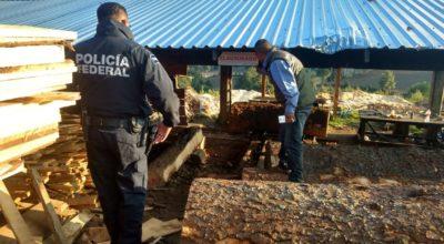 Aseguraron 813 toneladas de madera dentro de dos aserraderos en Edomex