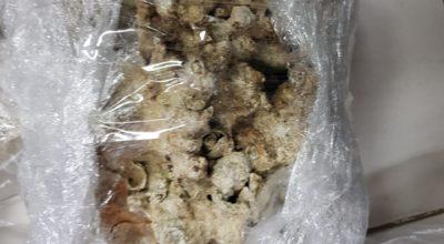 Aseguran  25 kilos de coral blanco en el Estado de México.